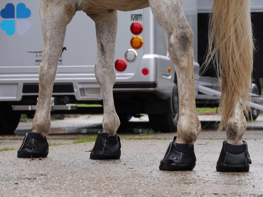 Equine Fusion hoefschoenen passen bij hoofwear